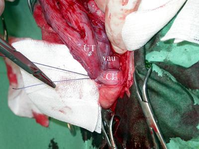 Ovariohystérectomie-8